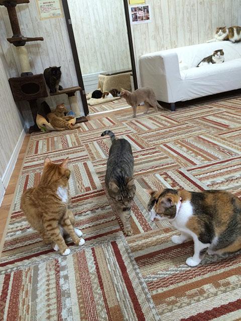 猫カフェ その1